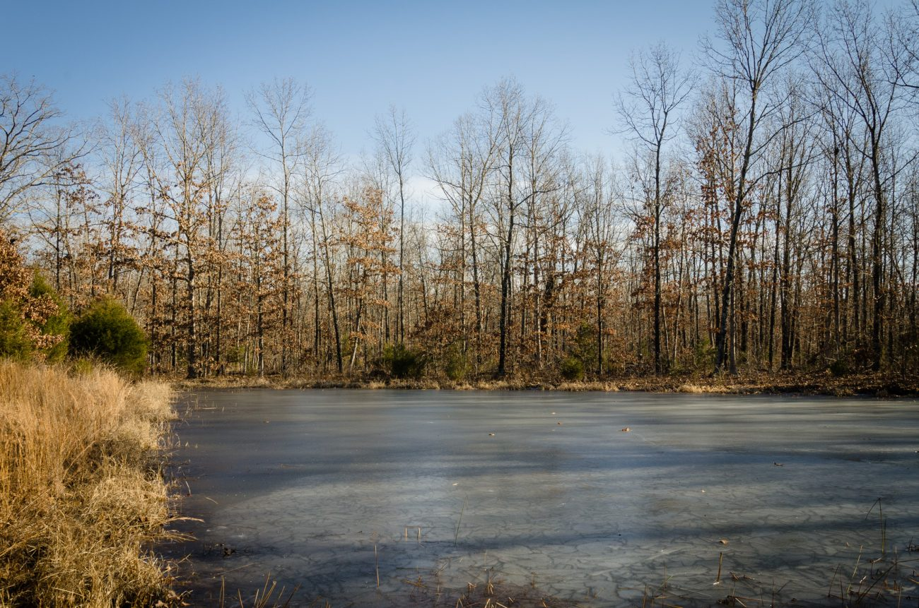 Ice on a Stock Pond at Compton Hollow Conservation Area