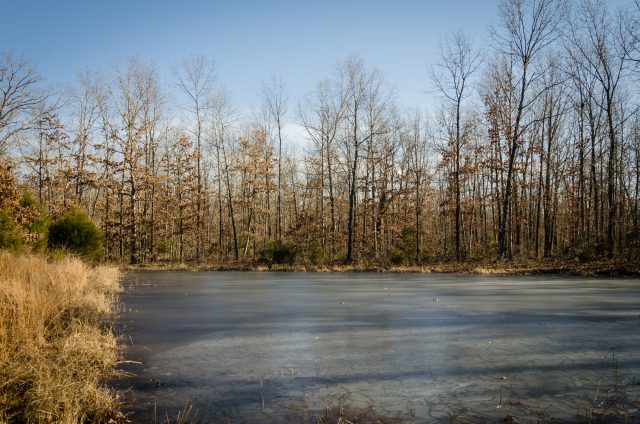 Frozen Stock Pond at Compton Hollow Conservation Area