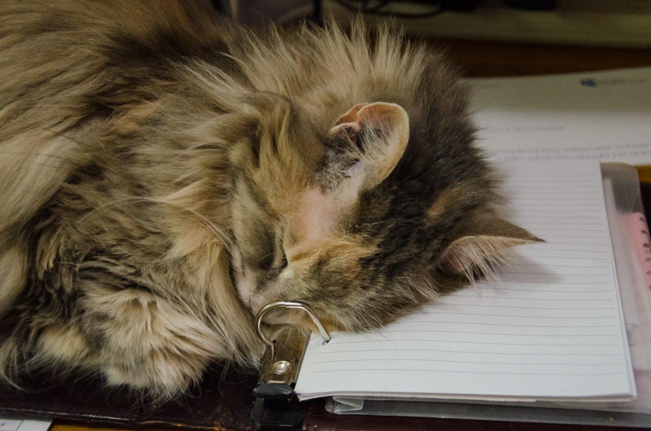 Blue Kitteh on my desk (again)